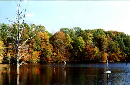 Lake Craig - Spartanburg County / Croft State Park