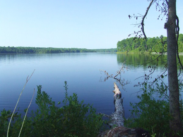 Lake Juniper