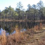 Flory Pond Video – Carolina Sandhills