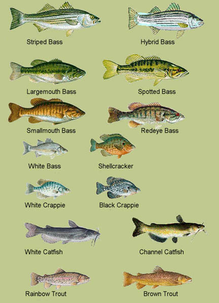 Locations of the lakes in south carolina for South carolina fishing